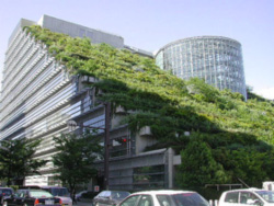 Typical example of a 'Vegetated Roof'